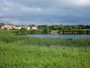 Natural Infrastructure of Wetlands near Homes
